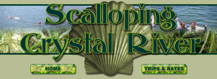 scalloping Crystal River, Crystal River scalloping, scalloping trips Crystal River, scallop charters crystal river, 2011 florida scallop season